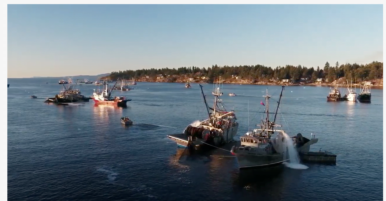 Photo of Herring fishing boats in the Gulf Islands